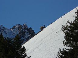 benoit-l-Accompagnateur en Montagne -2