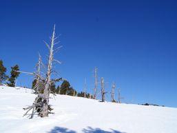susanj-d-Accompagnateur en Montagne -3