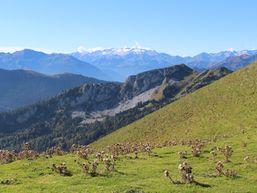 marianne-s-Accompagnateur en Montagne -4