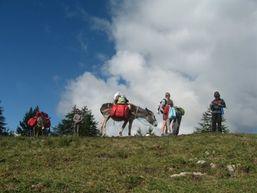 Randonnée itinérante avec des ânes dans le queyras