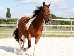 eleonore-f-Moniteur d'équitation-4