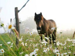 eleonore-f-Moniteur d'équitation-3