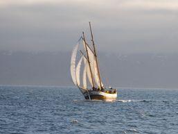 Voilier navigant sur la mer