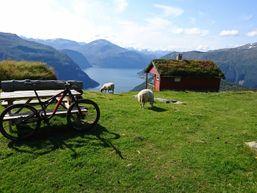 Mountain Bike Geiranger Fjord