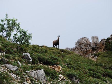 françois-b-Accompagnateur en Montagne -2