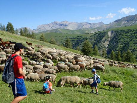 Rencontre avec les bergers de Haute-Bléone