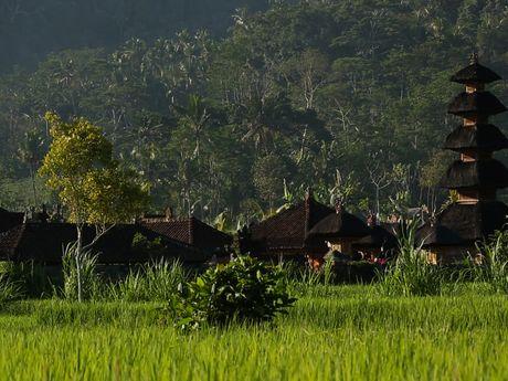 Village traditionnel entouré de rizières