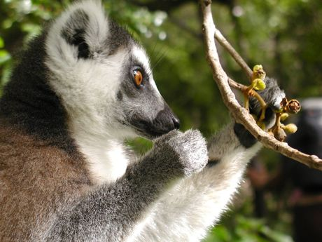 Voyage découverte de la faune Malgache