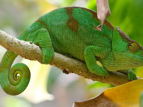 La biodiversité Malgache est unique