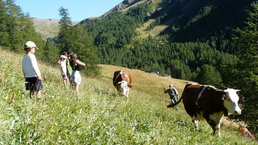 Découverte vie agricole, fabrication fromages