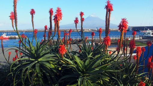 Le Mont Pico aux Açores
