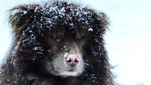 Raid en chien de traineau sur le lac Inari-8