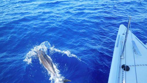 Croisière catamaran - Découverte des Grenadines-14