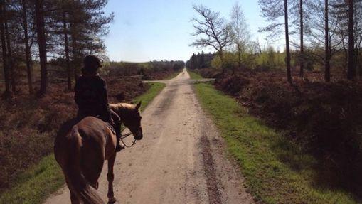 Week-end de randonnée à poney en forêt d'Orléans-1