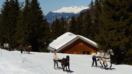 Ski joëring à Méribel -3