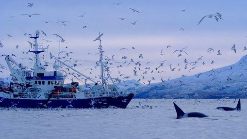 Aurores boréales et baleines à bosse -1