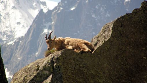 Tour du Mont-Blanc Sportif en Liberté-2