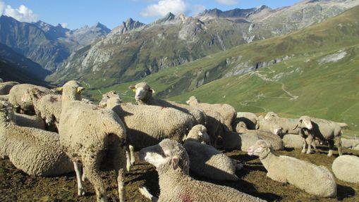 Tour du Mont-Blanc Intégral en Liberté - sans sac-6