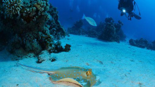 Croisière plongée au célèbre Saint John's Reef -1