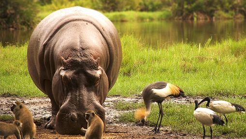 Les Grands parcs de la Tanzanie du Nord en Safari