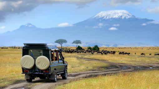 Grands parcs & rencontres - safari en groupe