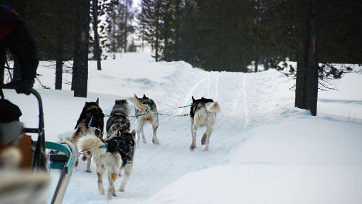 Raid motoneige & chien de traineau en Laponie