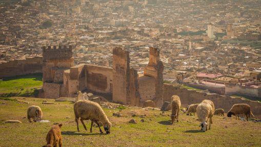 Trek dans le Moyen-Atlas & ville impériale de Fès