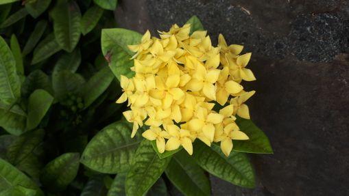 croisière privée aller vers Bora Bora en Bali 4.1