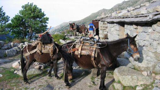 Trek en Corse en famille avec les ânes sans guide