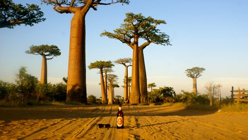 L'allée des Baobabs est un incontournable
