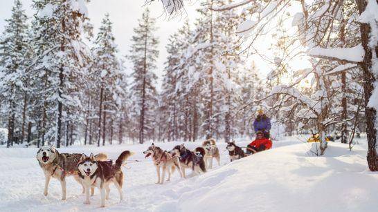 Séjour neige, chiens & aurores boréales en Laponie