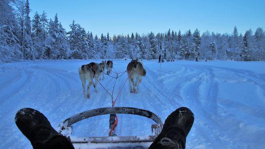 Montagne douce & chien de traineau dans la Clarée