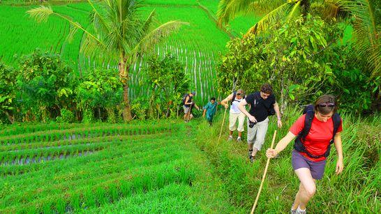 Randonnée à travers les rizières de Munduk