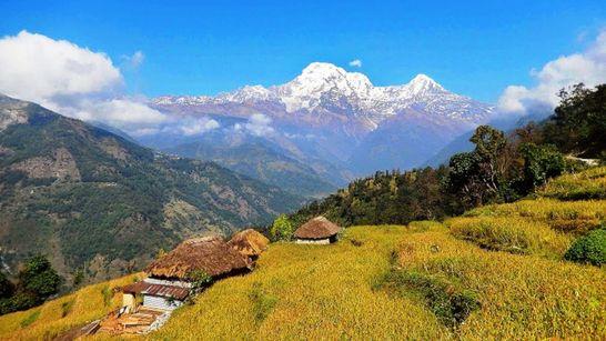 Des plaines du Teraï à l'Annapurna-2