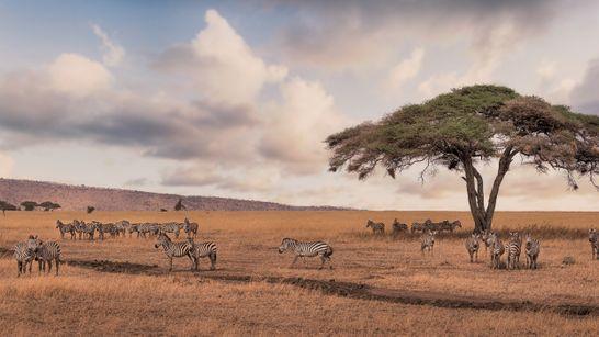 Tour complet de la Tanzanie en Safari