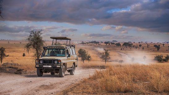 Les Grands Parcs de Tanzanie en Safari Express
