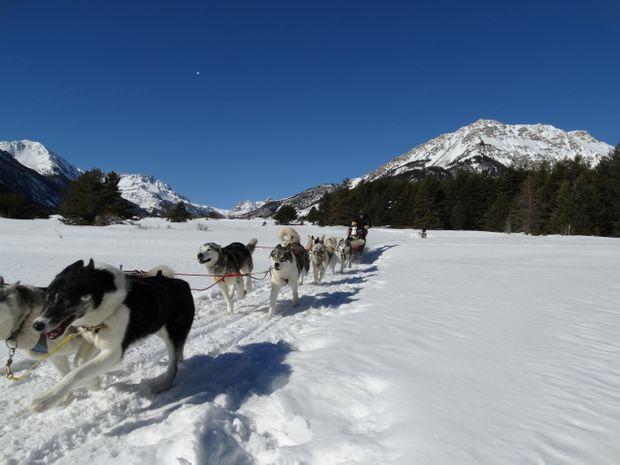 Conduite chiens traîneaux dans les Alpes du ud