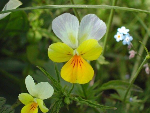Plantes comestibles et marche consciente-1
