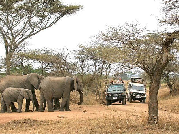 Éléphants dans le Parc de Tarangire