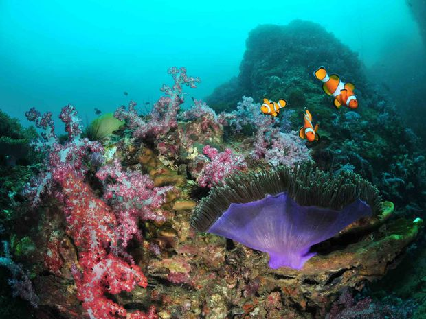 Baptème de plongée à Koh Phi Phi depuis Phuket -5
