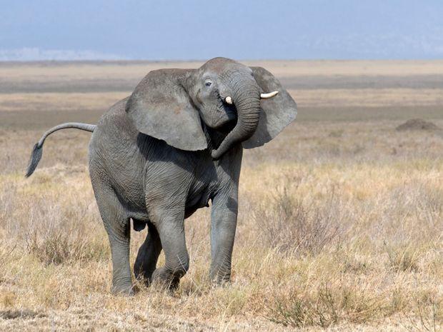 Duo Safari-Kilimandjaro par la voie Lemosho-8