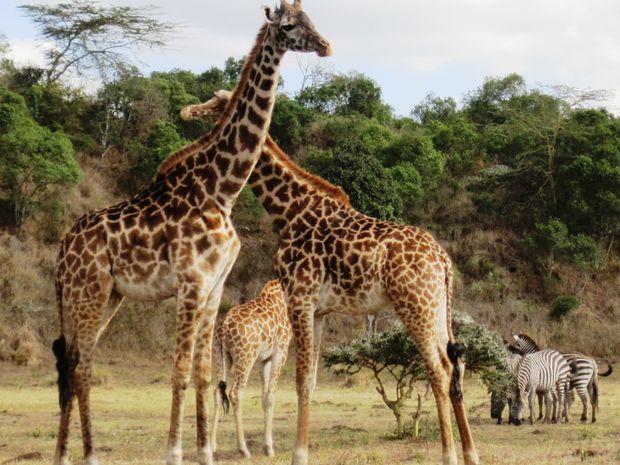 Safari 3 jours / 3 parcs