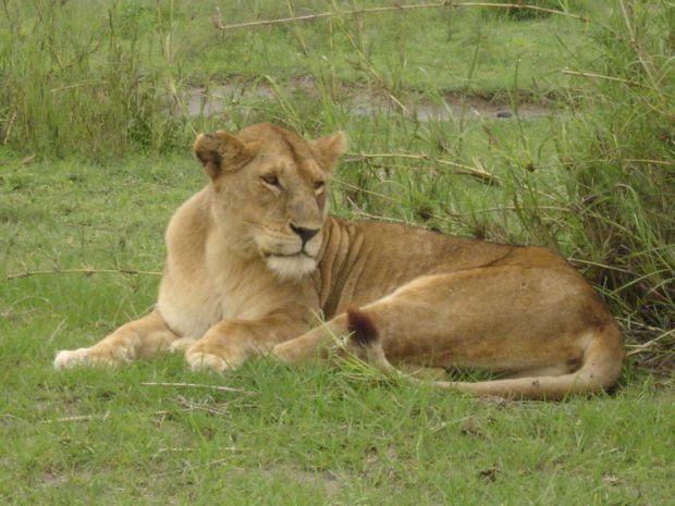 Safari 3 jours / 3 parcs-4