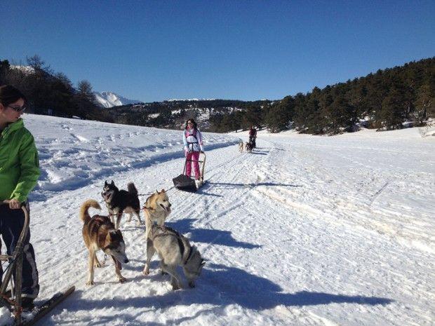 Week-end chiens de traîneaux et raquette-1