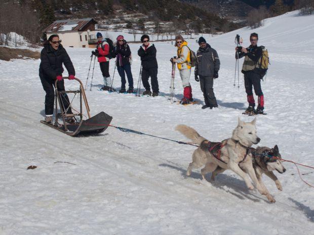 Week-end chiens de traîneaux et raquette-4