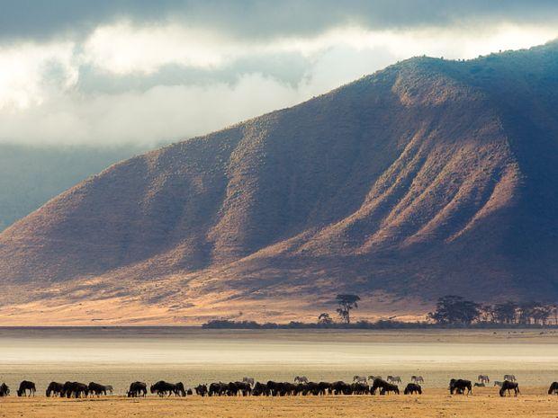 Safari au cœur des plus beaux parcs de Tanzanie-12