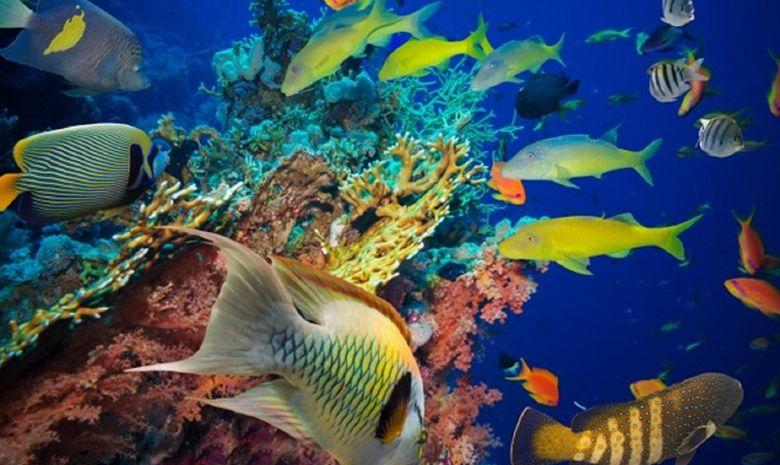 Tour des Îles de la Guadeloupe en catamaran -14