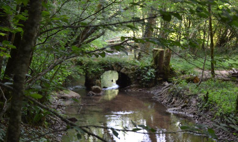 Stage de survie en pleine forêt périgourdine-1