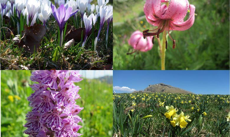 Observation de la faune et de la flore-2