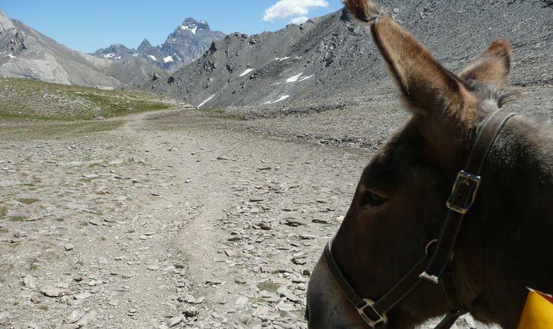 randonnée itinérante en famille avec des ânes-9